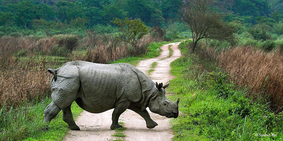 one horned Rhinoceros during our visit to National parks in Assam